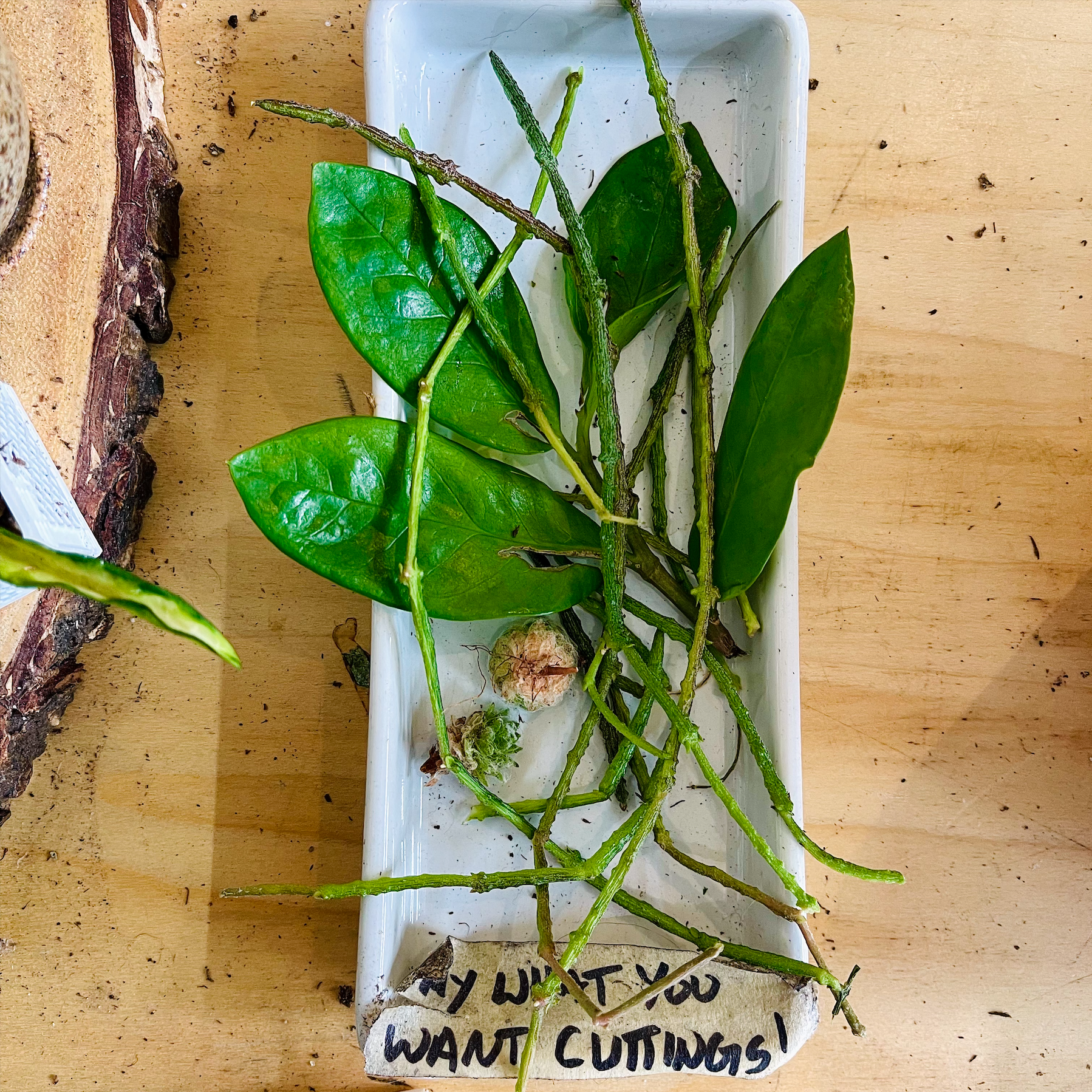 Pay what you can cuttings